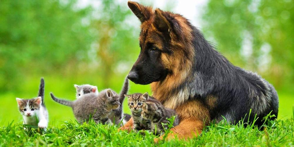 犬や猫の救急時の応急処置